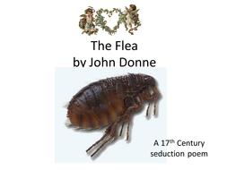 donne the flea
