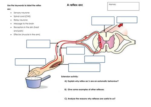 preview copy parts of pdf onto pdf