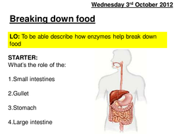 enzymes lesson.ppt