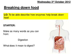 enzymes lesson 2.ppt