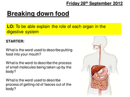 digestive organ and role.ppt