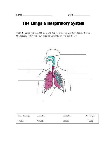 The lungs in the human body by elasticbandy teaching resources tes ccuart Gallery