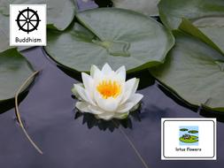 Buddhism lotus flower by jovest teaching resources tes buddhism lotus flower mightylinksfo