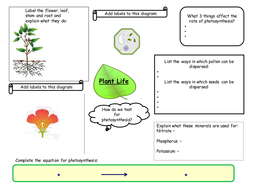 Plant life revision mind map