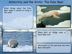 Antarctica - Polar Bear and Penguin