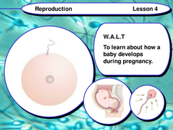 PowerPoint and Worksheet on The Developing Embryo