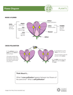 flower-diagram.pdf