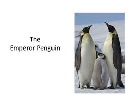 Emperor_Penguins.ppt