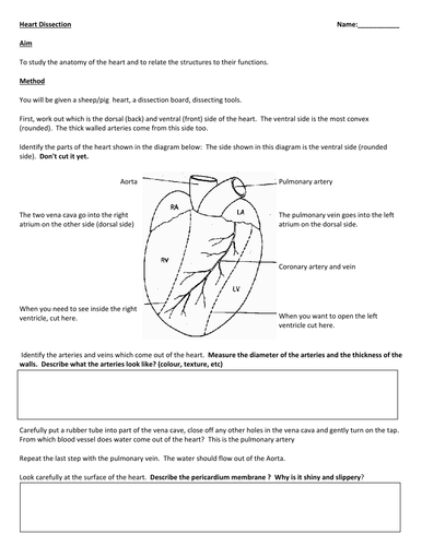 Dissection handouts by Masfar - Teaching Resources - TES