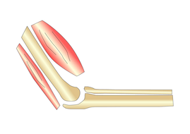 Investigating Joints - Active Lesson | Teaching Resources