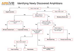 Newly Discovered Species - 7-11 - Newly Discovered Amphibian Identification worksheet.ppt