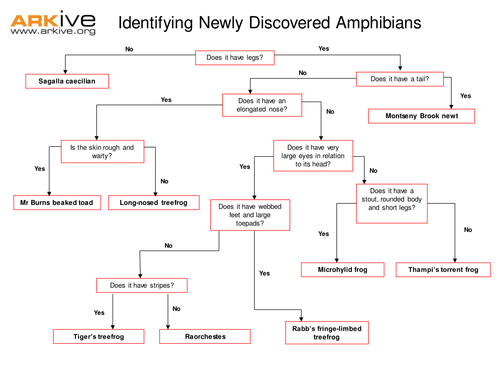 Species Discovery Keys and Classification by ARKive Teaching – Amphibians Worksheet