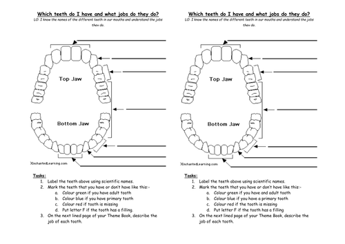 teeth unit plan by capital zab teaching resources tes. Black Bedroom Furniture Sets. Home Design Ideas