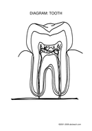 Teeth unit plan by capitalzab teaching resources tes tooth diagram lesson 1pdf ccuart Images
