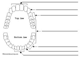 mouth diagram (lesson 2) jpg