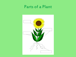 Parts of a plant and their function
