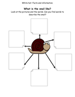 16-Thinking-Hat-Worksheets-for-The-Snail-And-The-Whale.doc