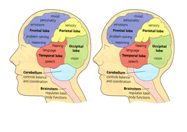 How Science Works Our Beautiful Brain, structure ...