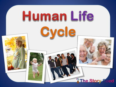 For Kids: Human Life Cycle by oceanic-dolphin - UK ...