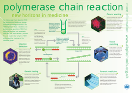 Polymerase chain reaction interactive activity