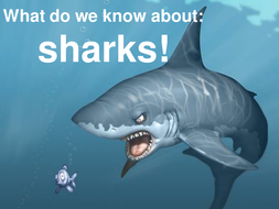 sharks powerpoint.ppt