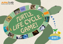 Turtle Life Cycle Teaching Resources