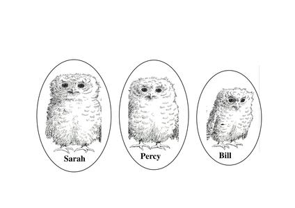 OwlBabiesPupptes.doc