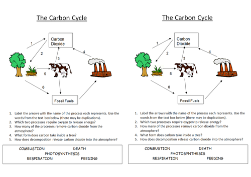 B1 54 Carbon Cycle by nryates157 Teaching Resources TES – Carbon Cycle Worksheet High School