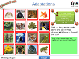 Choose one out! - Adaptations