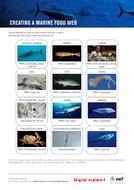 sf-marine-food-web.pdf