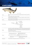 sf-fs-salmon.pdf