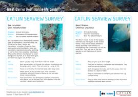 Explore The Great Barrier Reef: Activities
