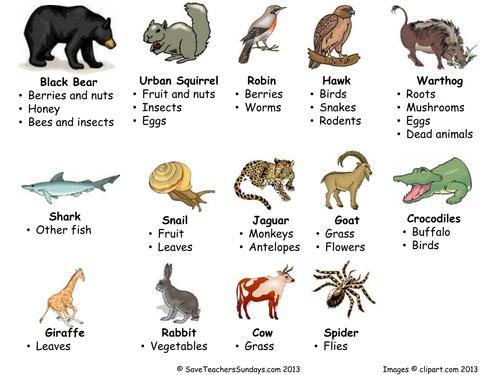 Carnivores Omnivores And Herbivores Venn Diagram By