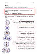 Mitosis Worksheets/Card Sorts by gxb08115 - Teaching Resources - Tes