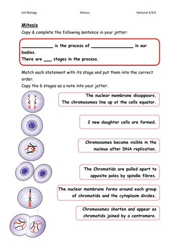 Printables Mitosis Worksheet mitosis worksheetscard sorts by gxb08115 teaching resources tes