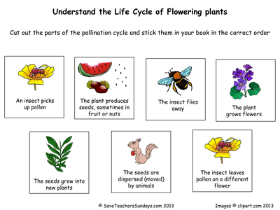 Life Cycle Of Flowering Plants Worksheet Pdf