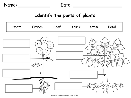Parts Of A Plant A Tree Lesson Plan Worksheet By