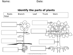 Lesson-2---Label-parts-of-a-plant-and-parts-of-a-tree-(worksheet).ppt