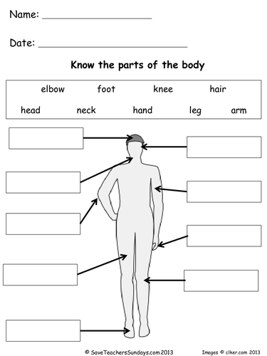 Parts of the body lesson plan and worksheets by saveteacherssundays parts of the body lesson plan and worksheets by saveteacherssundays teaching resources tes ccuart Gallery