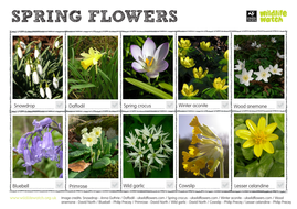 Spring Flowers Spotting Sheet By Thewildlifetrusts Teaching