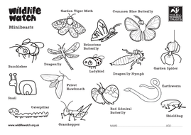 Minibeasts Colouring Sheets by TheWildlifeTrusts