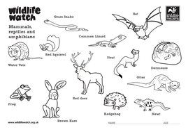 Mammals, reptiles and amphibians by TheWildlifeTrusts
