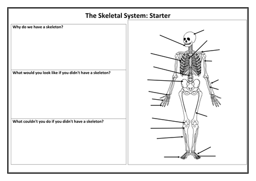 The Skeletal System by JonDudbridge Teaching Resources Tes – Skeletal System Diagram Worksheet