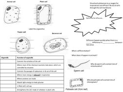 Cells & diffusion summary spread