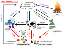 Carbon cycle collective memory challenge