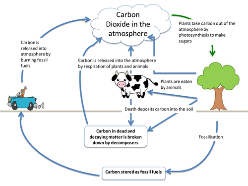 Carbon Cycle By Itegallagher Teaching Resources Tes