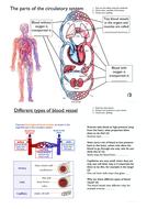 simple blood vessels worksheet for ks3 by rahmich teaching resources tes. Black Bedroom Furniture Sets. Home Design Ideas