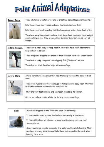 Animal Adaptations Worksheets : Polar animal adaptation by dommiebee teaching resources