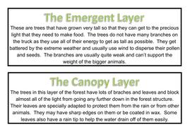 Rainforest Labels.pdf