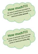 Rainforest Facts.pdf